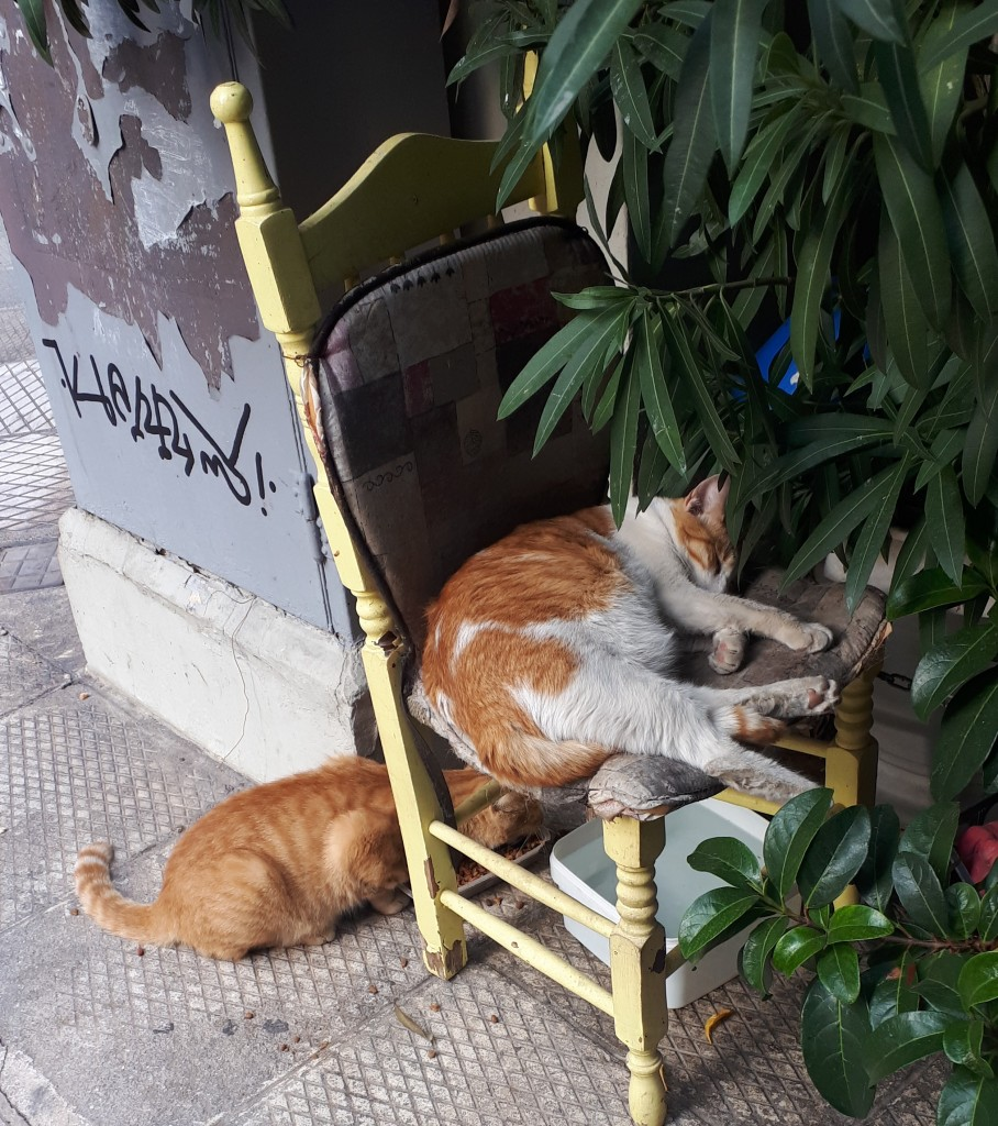 Ginger and white cat lying on a chair on the pavement with its legs sticking out